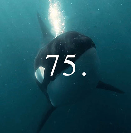 75. A story about whales, fish and trees